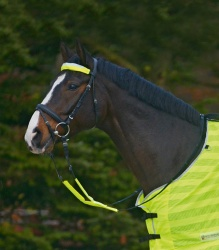 Reflective set on the bridle