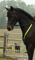Reflective bumper for horses